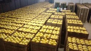 Exportação do melão ganha logística mais forte (Foto ilustrativa)