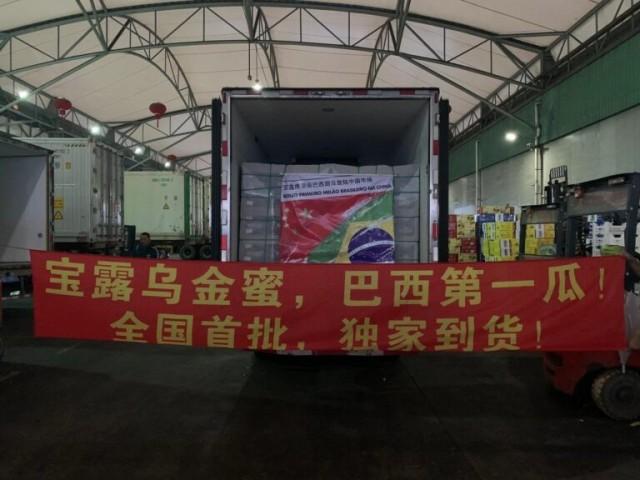 Melões já no Aeroporto de Xangai na China, em 2020 (Fotos: Arquivo Ftrade Brasil)