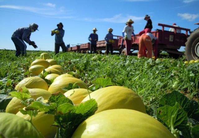 Parceria entre os dois grupos poderá resultar em fusão adiante, ampliando força em mercado de fruticultura e de capitais (Foto ilustrativa)