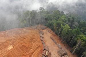 Amazônia: desmatamento e queimadas (Foto: Web)